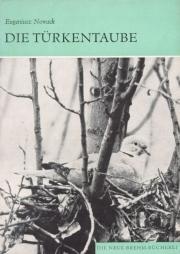 Die Türkentaube
