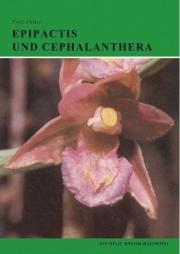 Epipactis und Cephalanthera
