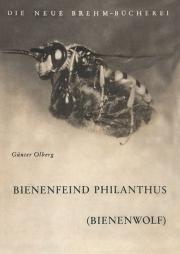 Der Bienenfeind Philanthus