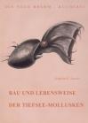 Bau und Lebensweise der Tiefseemollusken