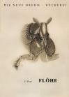Flöhe