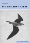 Die Brachschwalbe