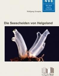 Die Seescheiden von Helgoland