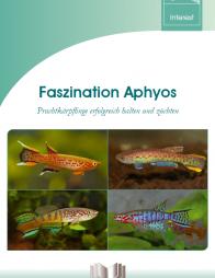 Faszination Aphyos – Prachtkärpflinge erfolgreich halten und züchten