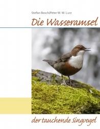 Die Wasseramsel – der tauchende Singvogel