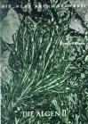 Die Algen 2