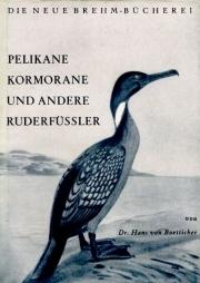 Pelikane, Kormorane und andere Ruderfüßler